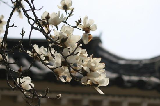 봄날, 꽃 그리고 너