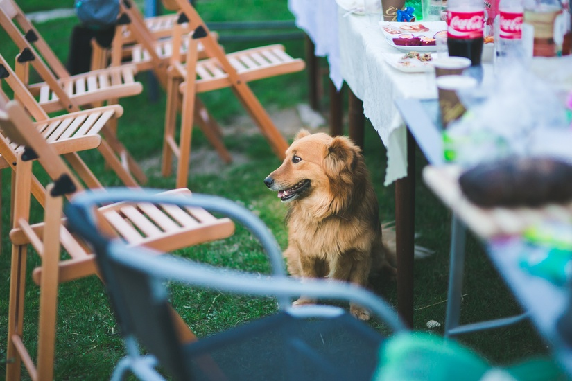 garden-party-animal-dog-large.jpg