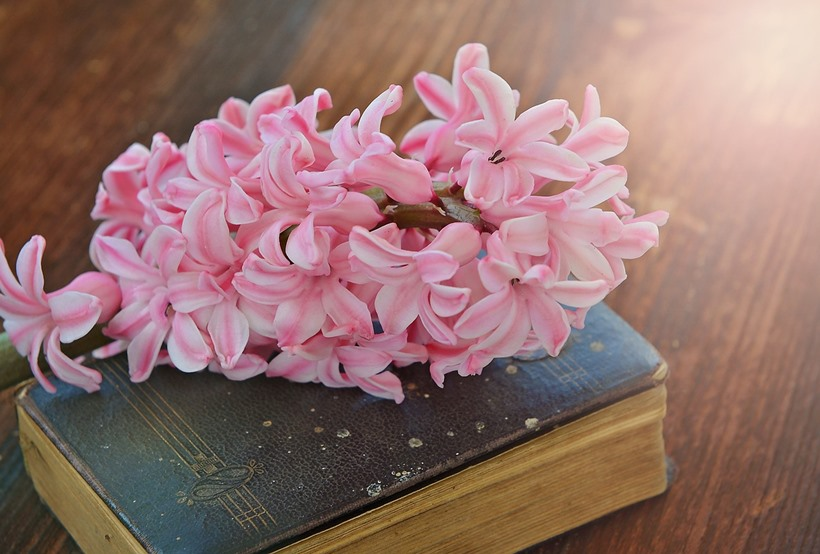 hyacinth-782328_1280.jpg